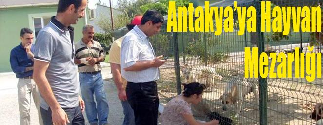 hayvan mezarlığı