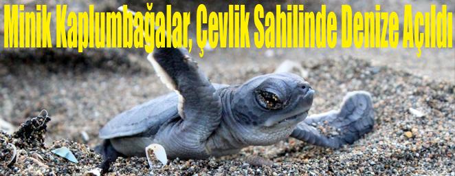 deniz kaplumbağası1