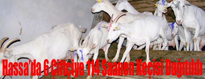hassa keçi dağıtımı
