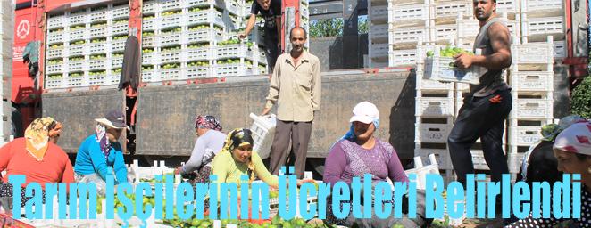 tarım işçileri1