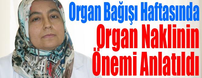 organ bağışı2
